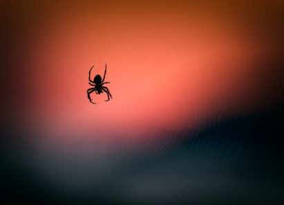 Spider in the sunset. Arachnophobia, or fear of spiders, is a common fear as it is based in a rational fear of harm. The California OCD and Anxiety Treatment Center treats all phobias and fears in Fullerton, as well as through online therapy, group therapy, and intensive out-patient treatment in Orange County, California.