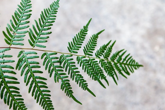 Fern leaf missing a small branch. Real Event OCD