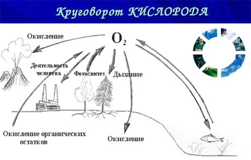 酸素の生物学的役割