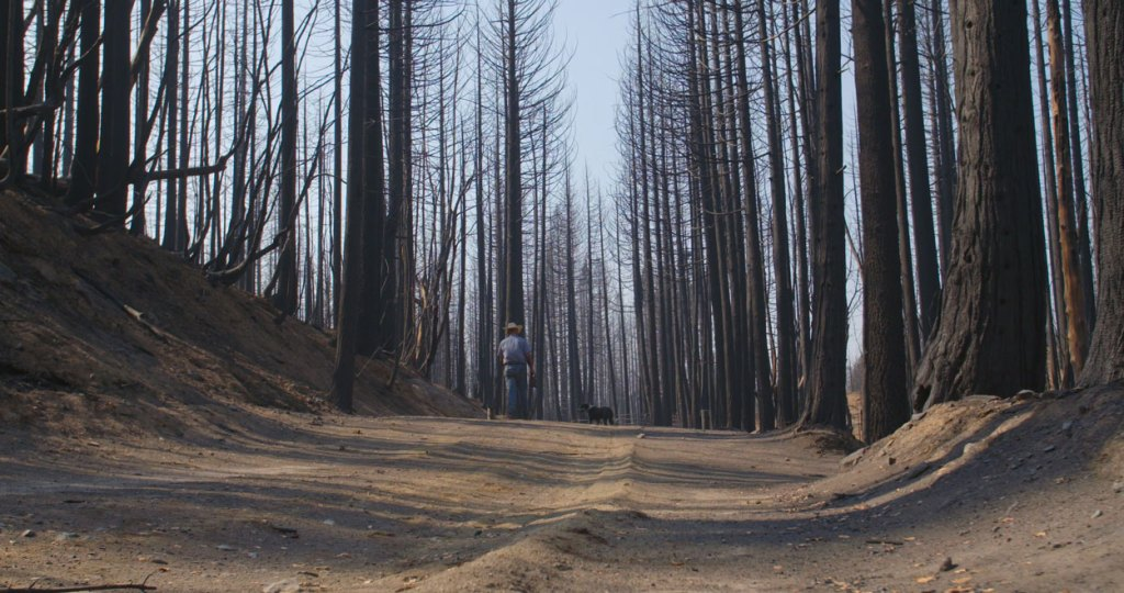 California forest destroyed by wildfire