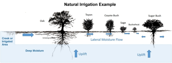 guide natural irrigation