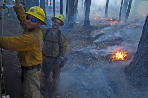 Firefighters work to help contain the Yosemite Rim Fire earlier this year. (USFWS)