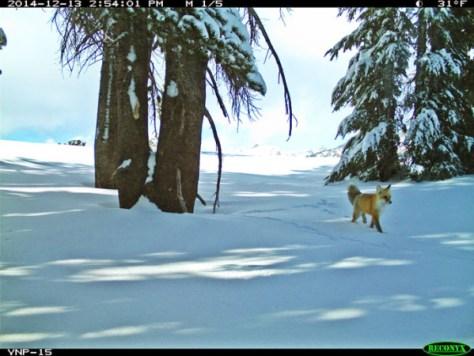Courtesy of Yosemite N.P.