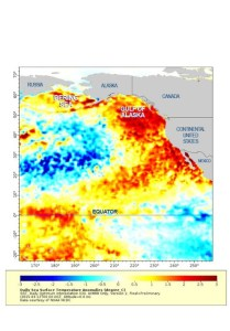 SEA SURFACE TEMPS FROM EARLIER THIS MONTH SHOW UNUSUAL WARMTH IN THE NORTHEASTERN PACIFIC. LARGE SEABIRD DIEOFFS AND RECENT NEWS OF STARVING SEA LION PUPS ARE INDICATIVE OF A WIDESPREAD PROBLEM FOR TOP-END SEA PREDATORS. (NOAA)