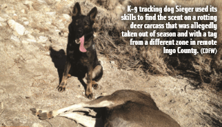 K-9 tracking dog Sieger used its skills to ?nd the scent on a rotting deer carcass that was allegedly taken out of season and with a tag from a different zone in remote Inyo County. (CDFW)