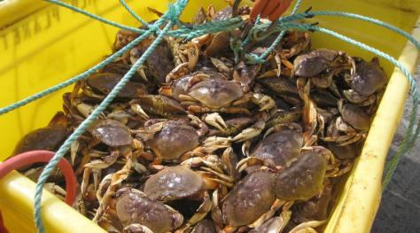 crabs-in-bin-commercial-catch2