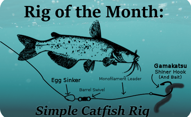 Rig of the month a simple catfishing setup for Best catfish rig for bank fishing