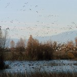 Duck Season Extension, Opposition To Grey Wolf Delisting Among Commission Results