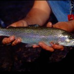 Concerned About Trout Regulations? CDFW To Host Public Forums