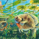 Wildlife Forever Announces State Fish Art Contest Winners