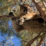 Not Your Everyday 'Cat Rescued From Tree' Story