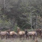CDFW Share Program Will Offer 47 Elk Hunts