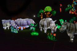 rhinoceros-gaillac-b