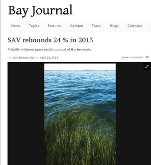 Bay Journal Website