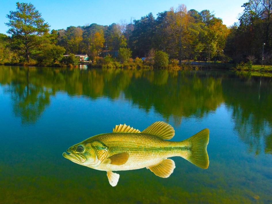 Big Fish, Pine Lake, GA ©Calvin Burgamy