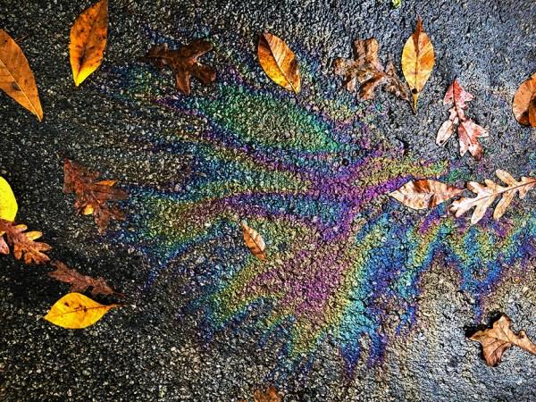 Water, Oil, Leaves, Pine Lake, GA