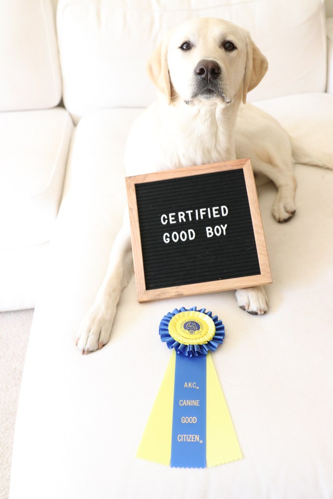 What are the requirements for the Canine Good Citizen test? CGC Test Items:
