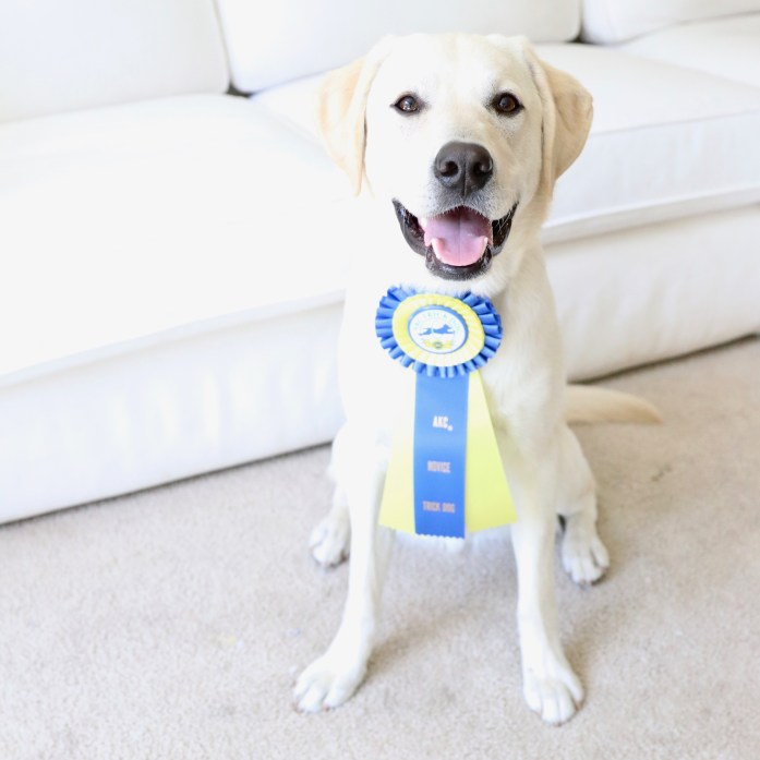 How do you prepare your dog for the Canine Good Citizen Test?