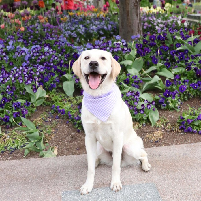 things to do with your dog in salt lake city