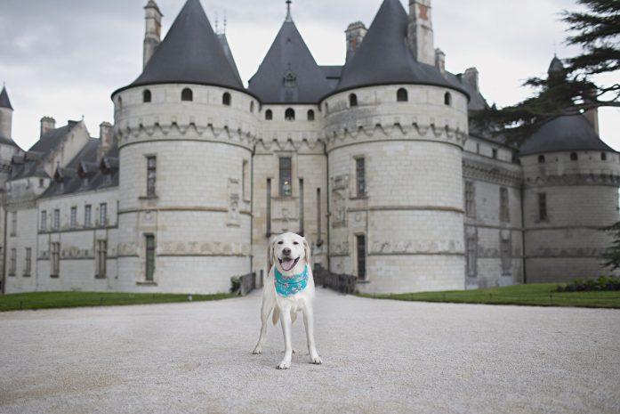 dog friendly chateau du chaumont