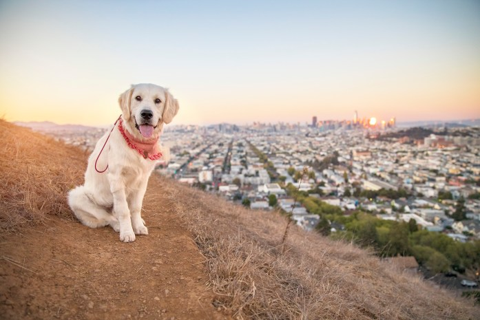 dog on the Bernal Heights Summit hike in front of the san francisco skyline