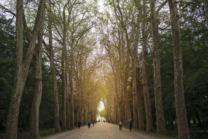coridoor of trees at chateau de chenonceau