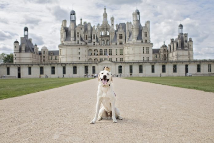dog friendly Château de Chambord