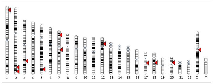 calvitie gène