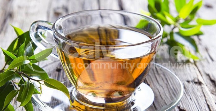 tè verde calvizie