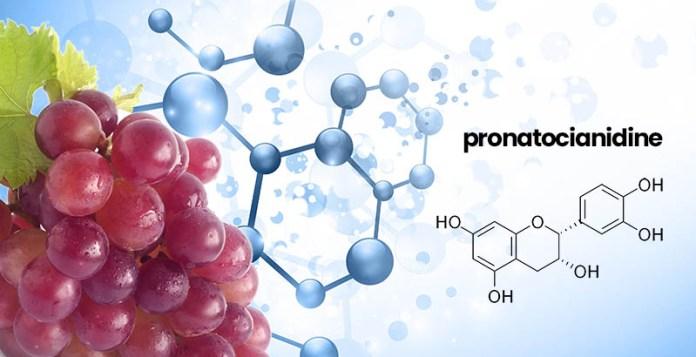 antiossidanti e anti radicali liberi: le proantocianidine