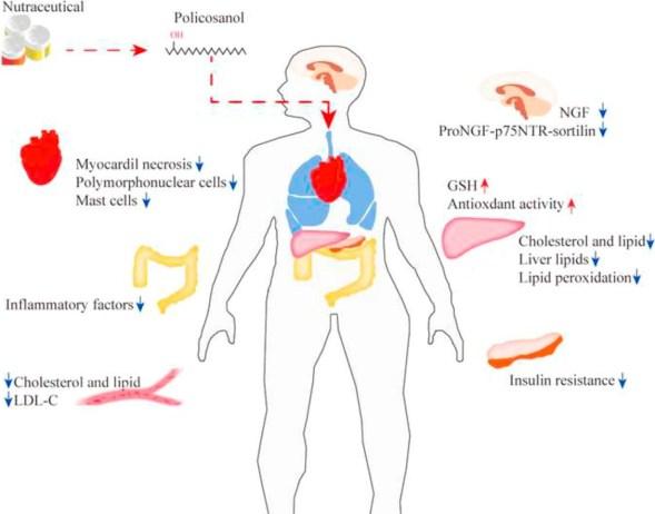 policosanoli_calvizie_colesterolo