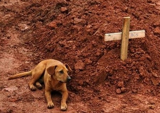 Laeo refused to leave the grave of his dead owner for days