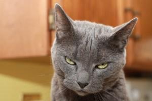 Calypso Pension Chats Vendée colère