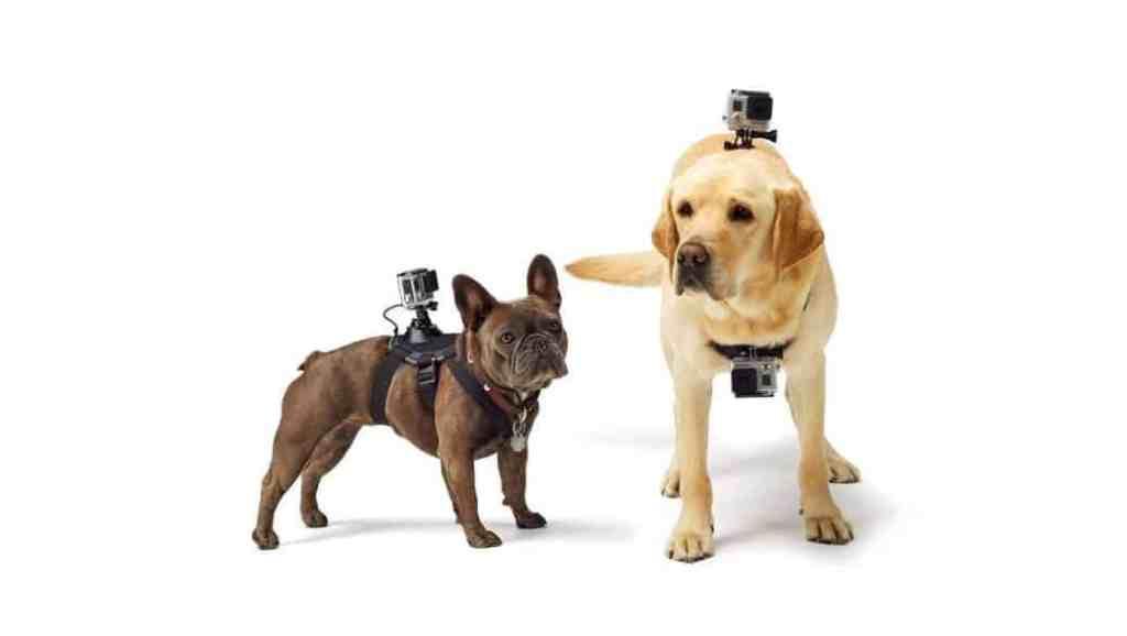 Arnés para Perros y animales ORDEL compatible con cámaras GoPro HERO
