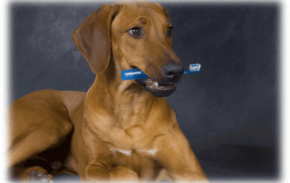 "February is ""Pet Dental Hygiene"" Month"