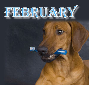 "February is ""Pet Dental Hygiene"" Month"