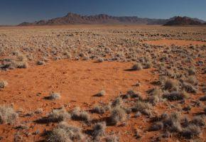 ¿Cómo se forman los 'círculos de hadas' del desierto de Namibia?