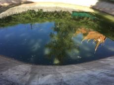 19-jan-turtle-pool-reflections
