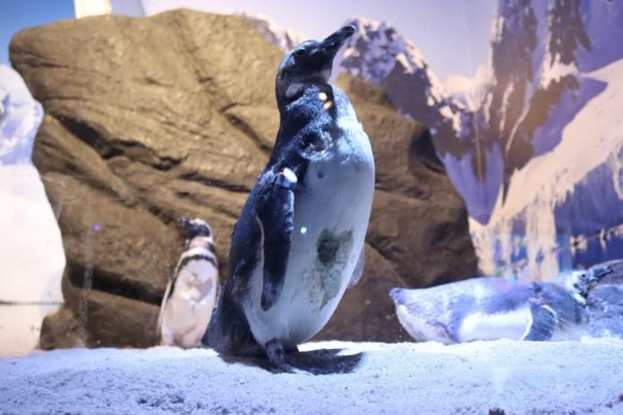 Vida Marinha é a atração do Oceanic Aquarium em Balneário Camboriú