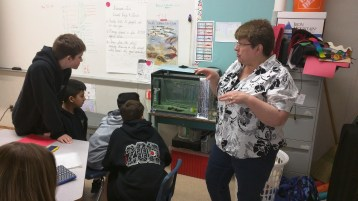 Salmon in the classroom
