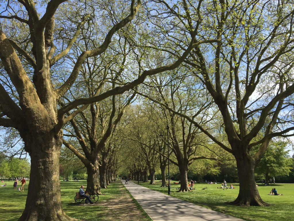 Jesus Green Trees