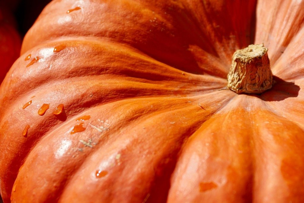 pumpkin, orange, harvest-2736964.jpg