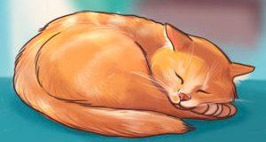 kediler nasıl uyur