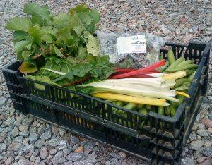Our first standard veg box