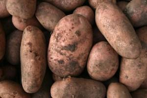 potatoes-camelcsa