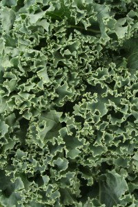 curly kale