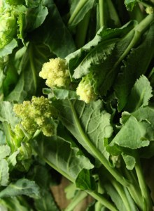 white-sprouting-broccoli-camel csa