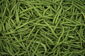 french beans-camel csa
