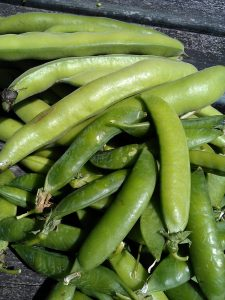 Broad-beans-peas-camelcsa-060713