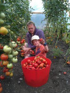 tomato-picking-camelcsa-230813